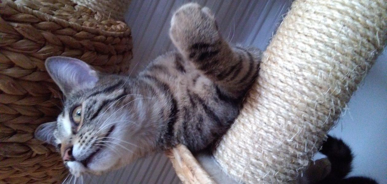 Poznajcie zwierzaki twórców – Gnidka, drugi z kotków Cahirki