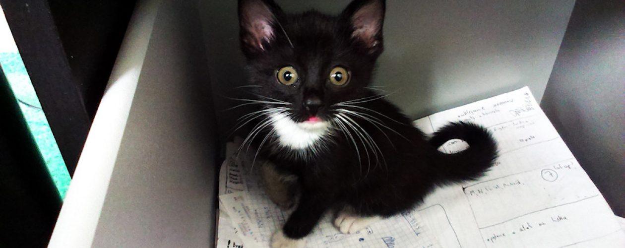 Poznajcie zwierzaki twórców – Mortimer, pierwszy kotek Cahirki