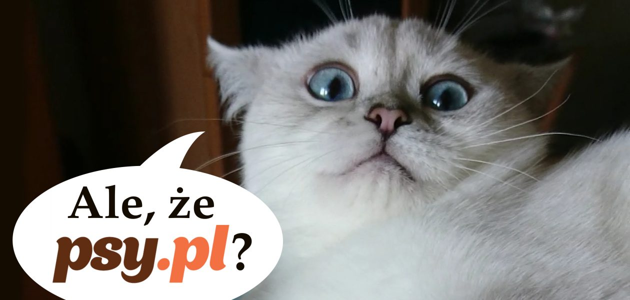 Psy.pl, koty.pl i teleTOON+ partnerami medialnymi Petsbury!
